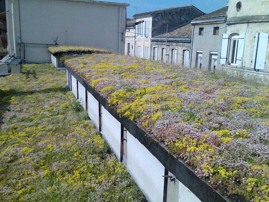 Des plantes locales pour la toiture végétalisée