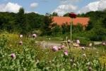 salon_biodiversite_maison