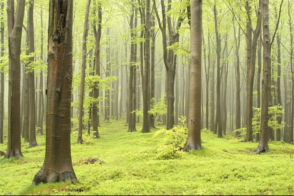 Développement de la fiilère Forêt bois en France