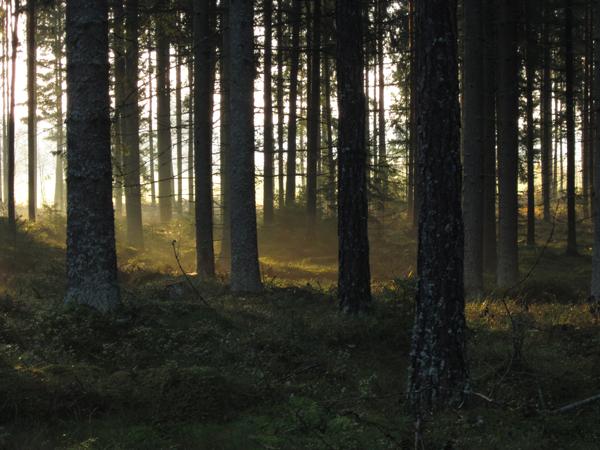 Forêt et filière bois